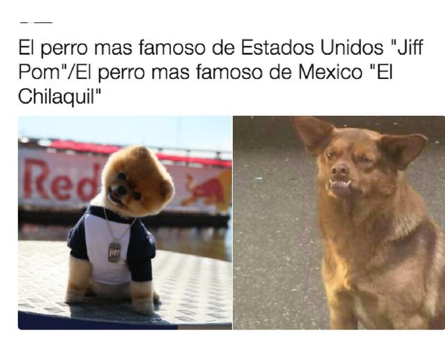 CHC6 640x500 la historia detrás de los memes de 'chilaquil' el perro más famoso