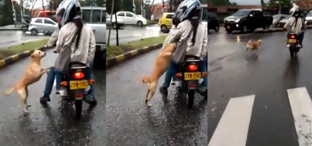 Dueños abandonan a perrito en plena calle y causan furia en las redes