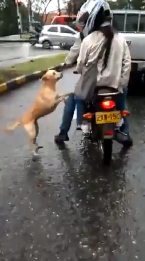 Perrito suplica a sus dueños que no lo abandonen