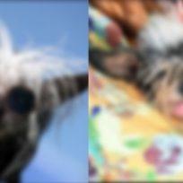 perritos extraños