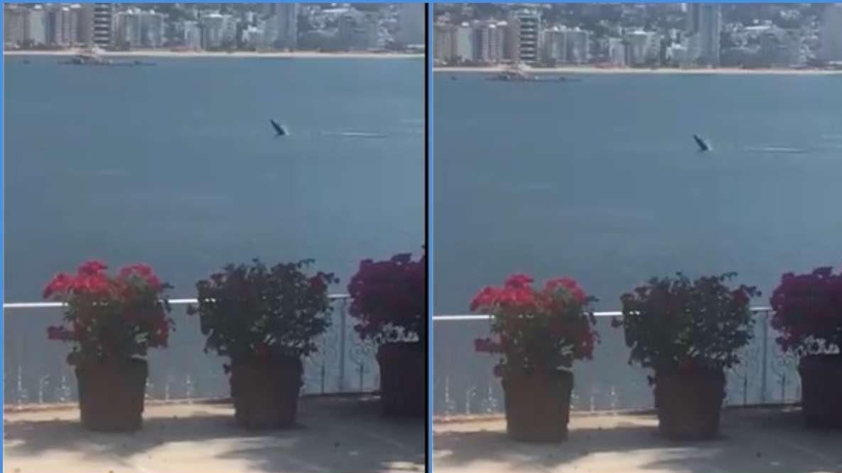 ballena-en-acapulco-aprovecha-la-ausencia-de-turistas-para-salir