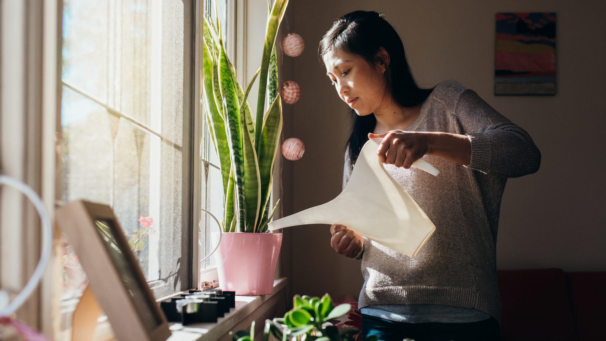plantitas-que-dan-buena-suerte-para-tu-hogar-y-que-debes-de-tener