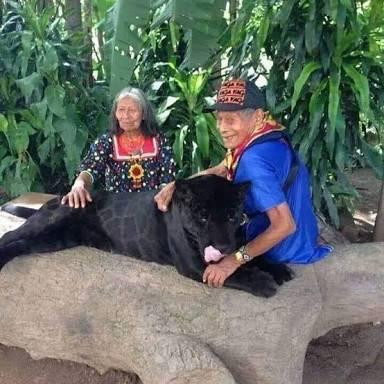 Jaguar negro es cuidado por abuelos maya desde cachorro