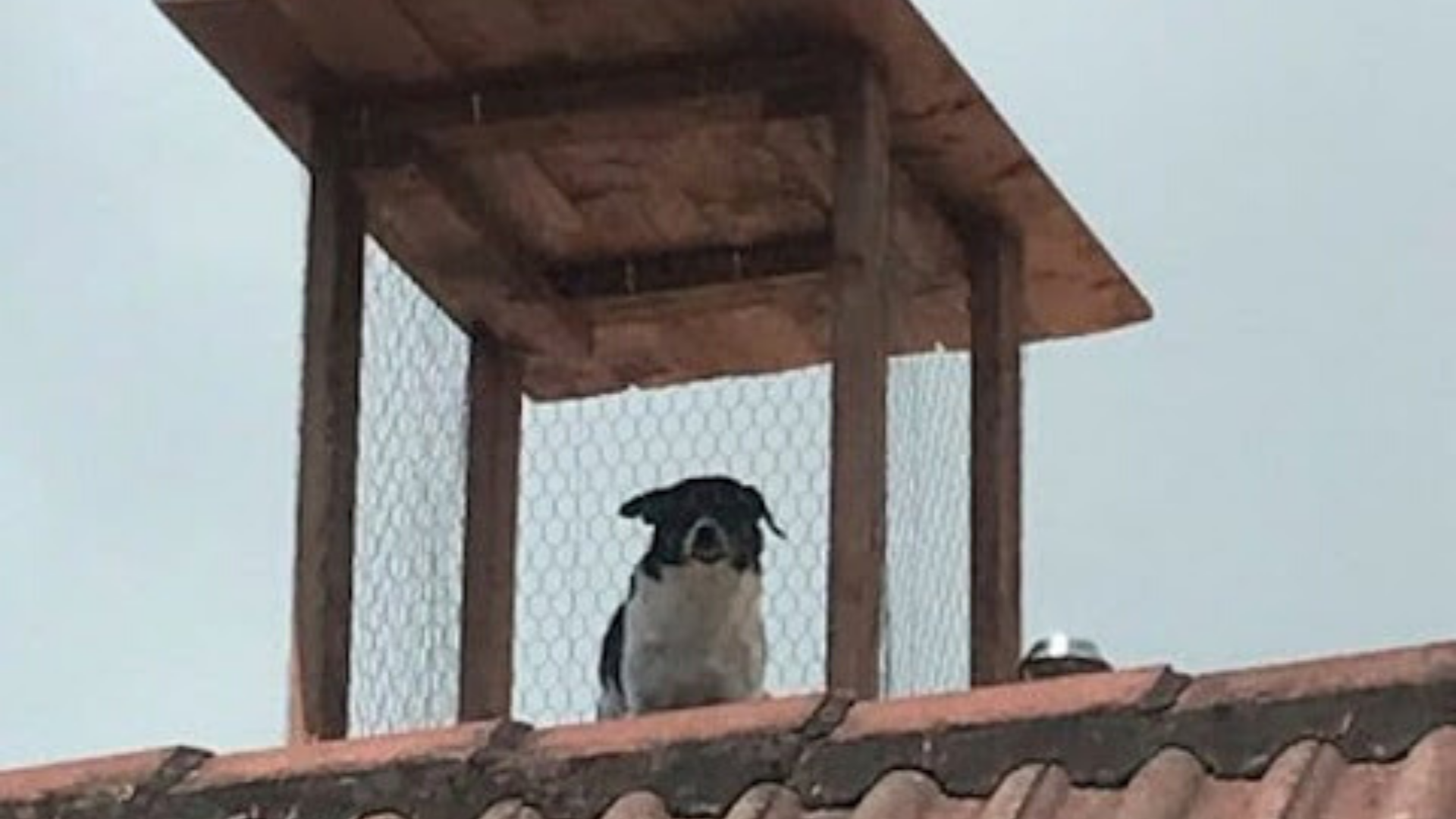 perro vigilante