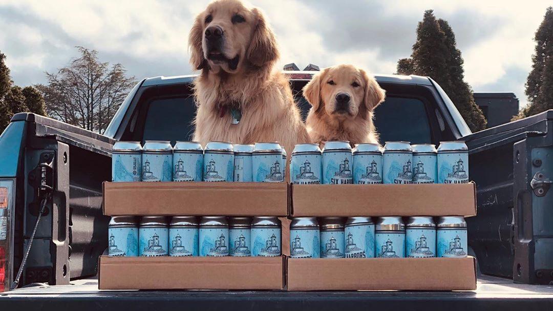 perritos cerveceros