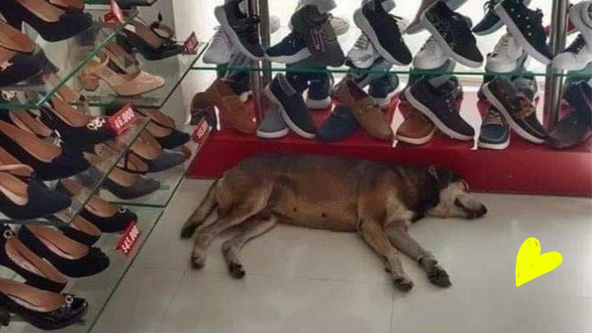 Gerente de tienda se niega a sacar a perrito para protegerlo de la lluvia