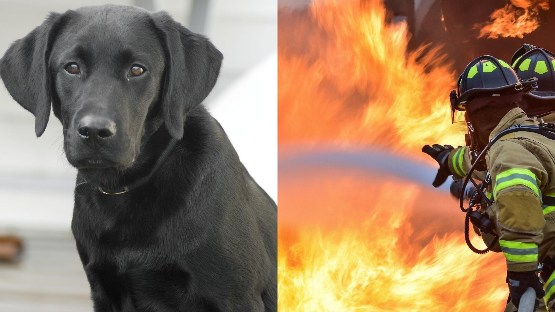 Perrita conmueve al salvar la vida de su dueña y su familia de un incendio