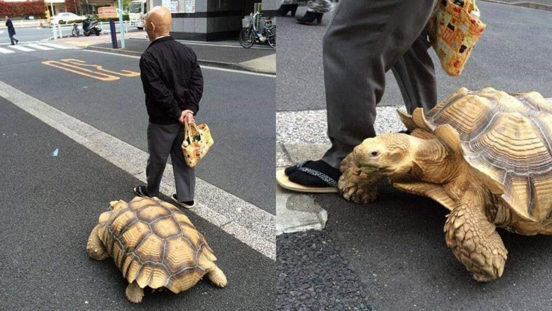 Saca a pasear a su tortuga y lo llaman el hombre más paciente del mundo
