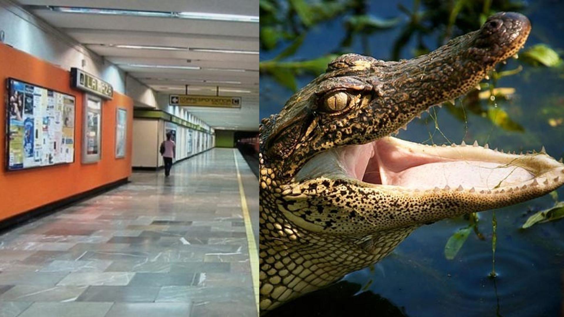Captan a dos personas paseando sus cocodrilos en el metro