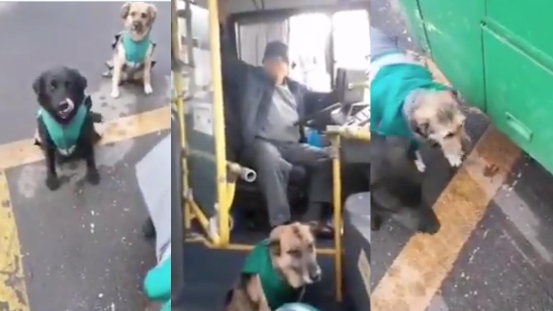 Choferes adoptan a perritos callejeros para que los acompañen