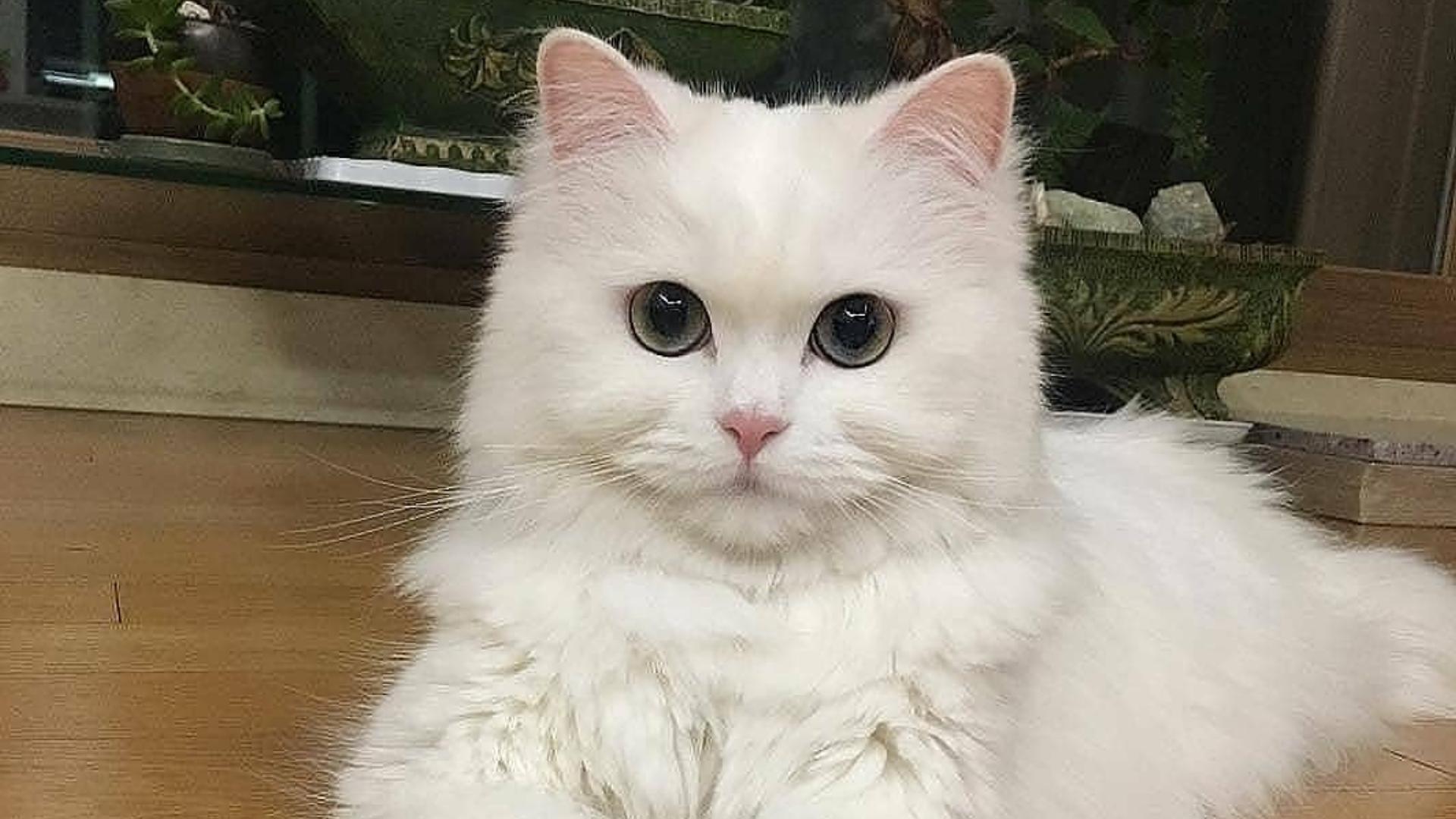 Estudio confirma que los gatos sí reconocen su nombre, pero prefieren ignorarte
